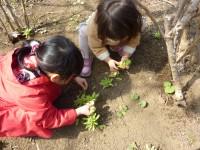 春の1日保育